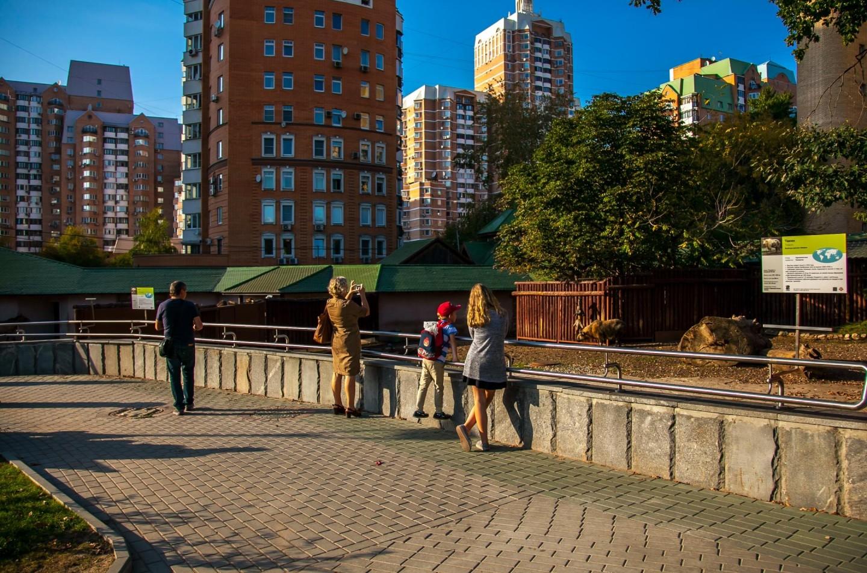 Такин, Московский зоопарк, Москва — ParkSeason