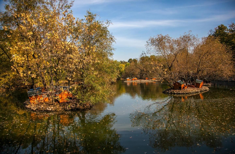 Пруд с речными утками, Московский зоопарк, Москва — ParkSeason