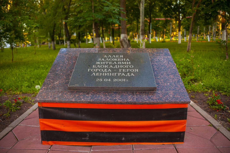 Аллея, которую заложили жители блокадного Ленинграда — ParkSeason