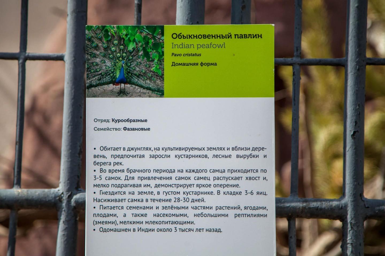 Павлин, Московский зоопарк, Москва — ParkSeason