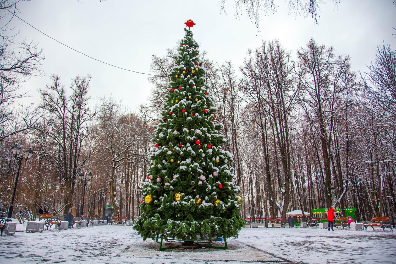 Елка, Парк «Бабушкинский», Москва — ParkSeason