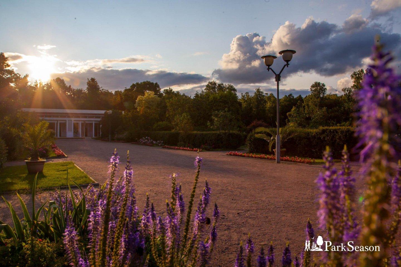 Большой розарий, Парк «Сокольники», Москва — ParkSeason