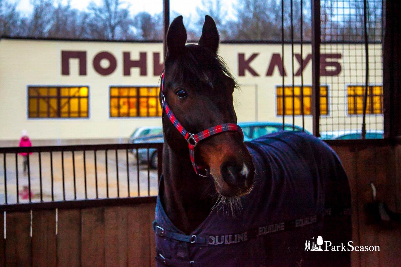 Конный клуб, Парк «Измайловский», Москва — ParkSeason