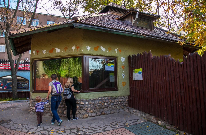 Игуана, Московский зоопарк, Москва — ParkSeason
