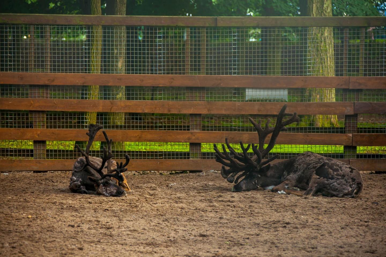Мини-зоопарк — ParkSeason