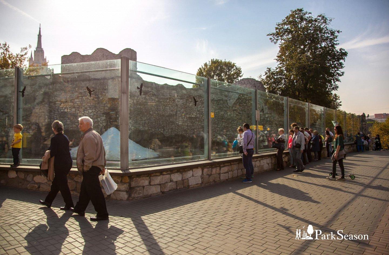Белый медведь, Московский зоопарк, Москва — ParkSeason