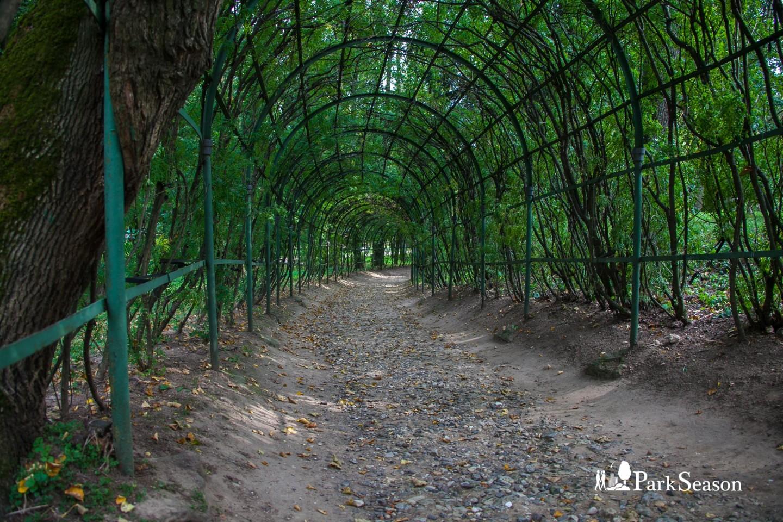 Арка из деревьев, Музей-усадьба «Архангельское», Москва — ParkSeason