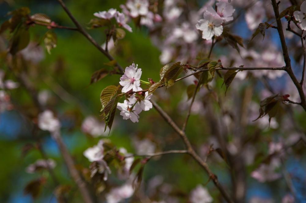 Дальневосточный сад — ParkSeason