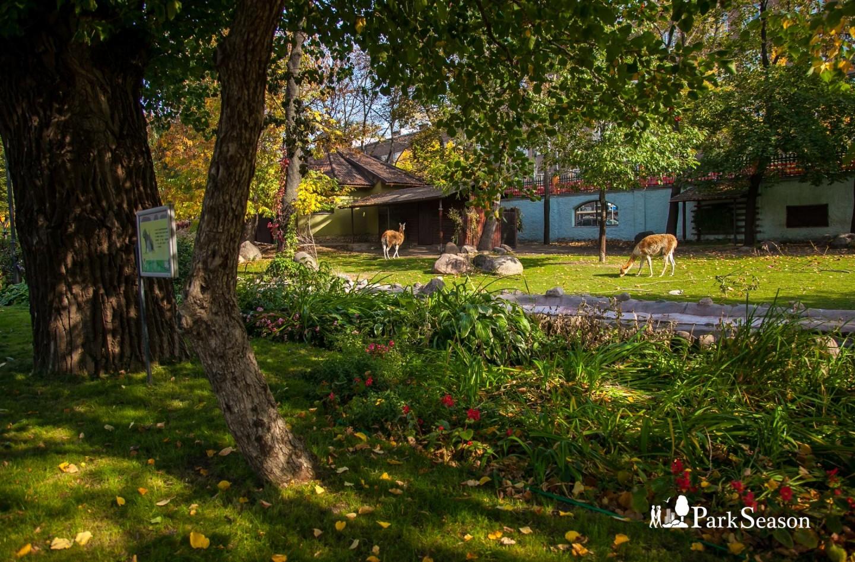 Викунья и гуанако, Московский зоопарк, Москва — ParkSeason
