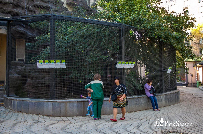 Цапли, каравайки и чайки, Московский зоопарк, Москва — ParkSeason