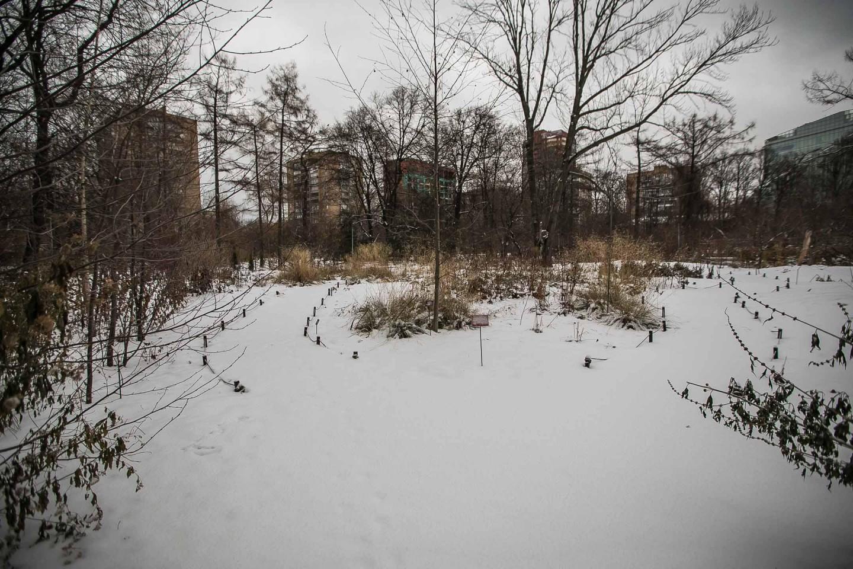 Флора средней полосы России — ParkSeason