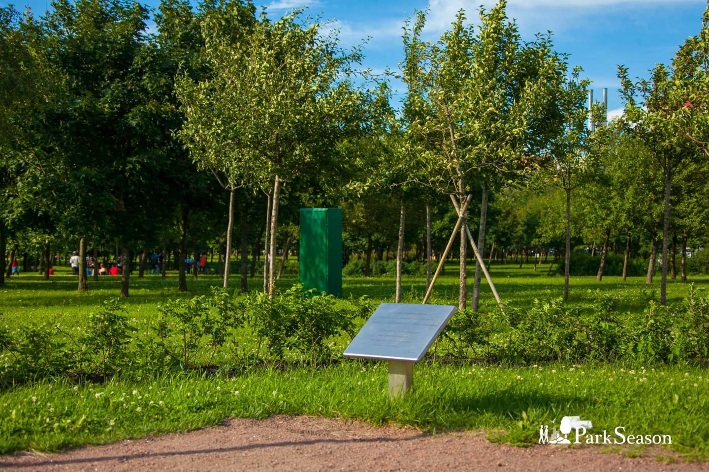 300 декоративных яблонь от города Хельсинки — ParkSeason