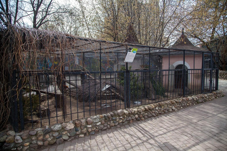 Золотой фазан, Московский зоопарк, Москва — ParkSeason