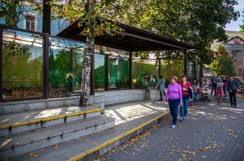 Кенгуру Беннета, Московский зоопарк, Москва — ParkSeason