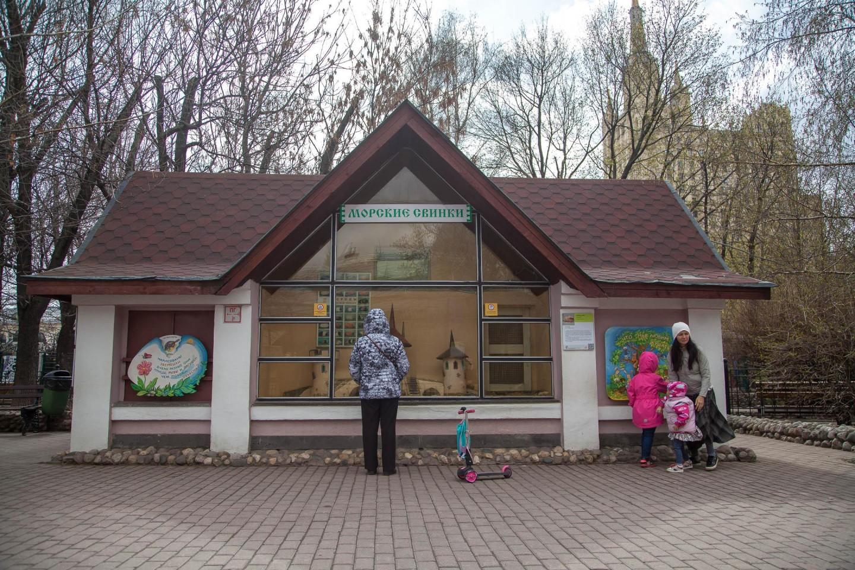 Морские свиньи, Московский зоопарк, Москва — ParkSeason