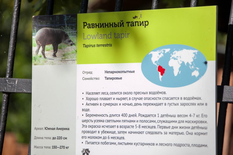 Равнинный тапир, Московский зоопарк, Москва — ParkSeason