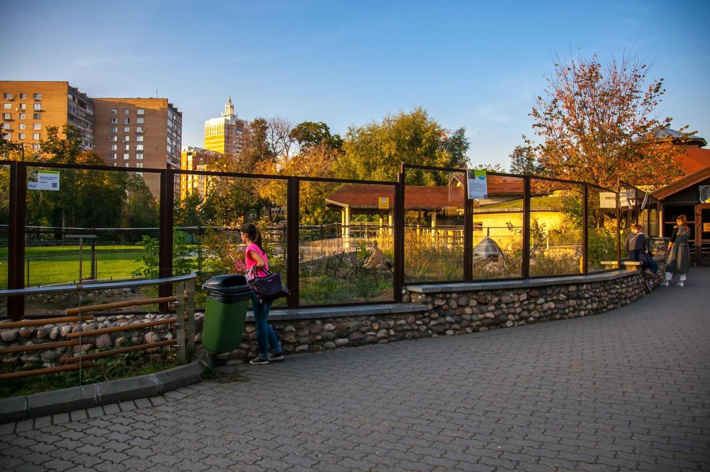 Сурикаты, Московский зоопарк, Москва — ParkSeason