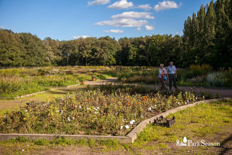 Экспозиция декоративных цветочных растений — ParkSeason