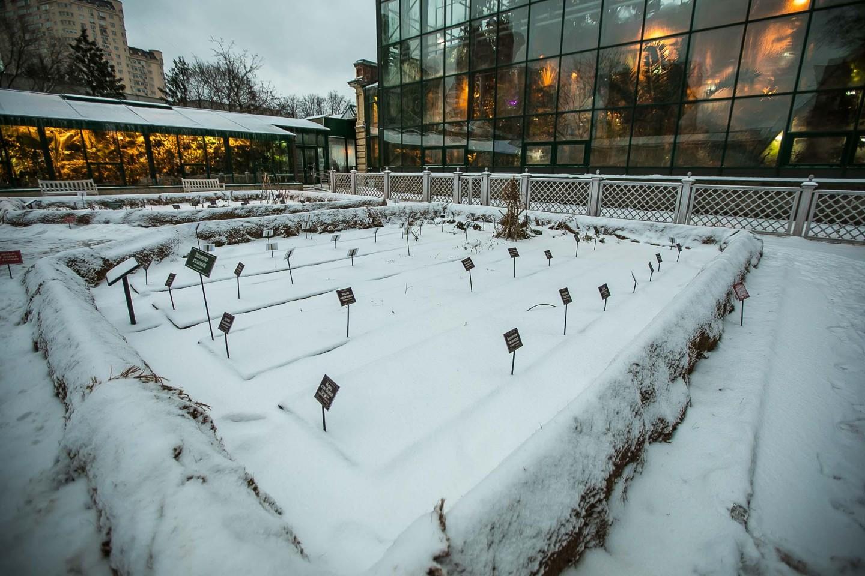 Сад лекарственных трав, Аптекарский огород, Москва — ParkSeason