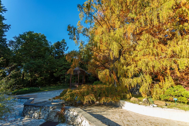 Японский садик — ParkSeason