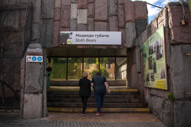 Медведи губачи, Московский зоопарк, Москва — ParkSeason