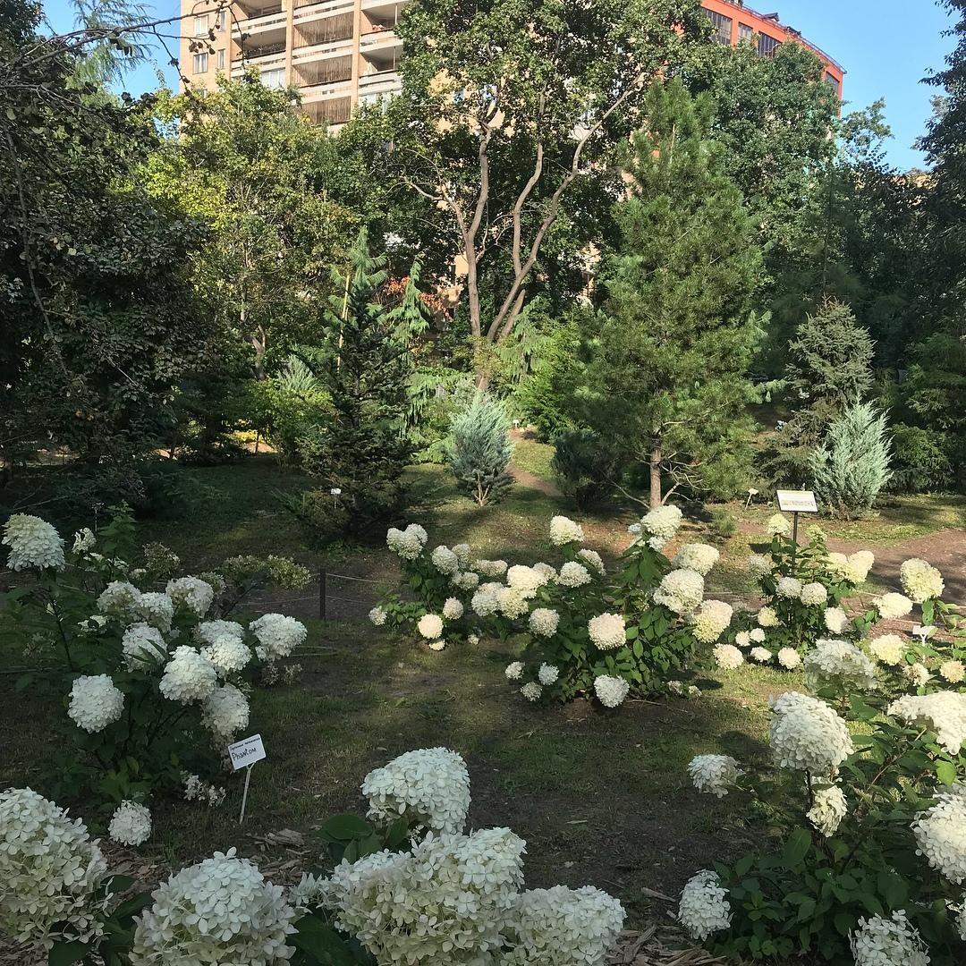 Сад гортензий — ParkSeason