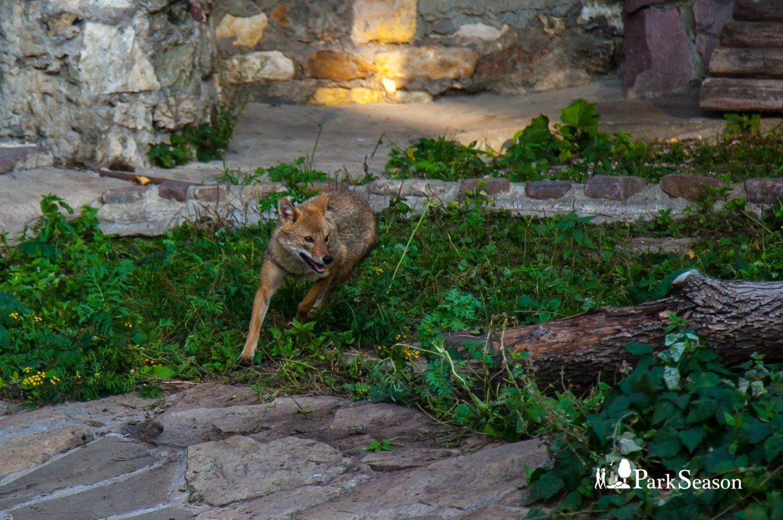 Тундровый волк, Московский зоопарк, Москва — ParkSeason