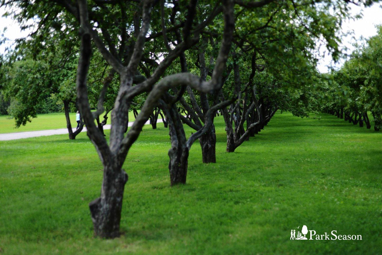Вознесенский сад, Усадьба «Коломенское», Москва — ParkSeason