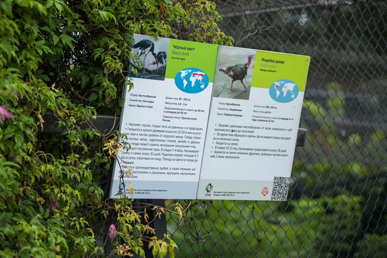 Черный аист, Московский зоопарк, Москва — ParkSeason