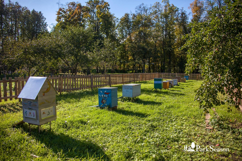 Пчелиная пасека — ParkSeason