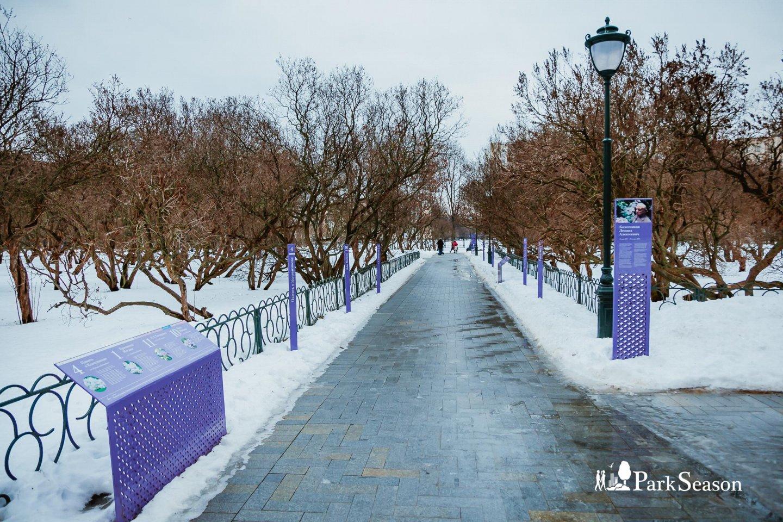 Маточный сад, Сиреневый сад, Москва — ParkSeason