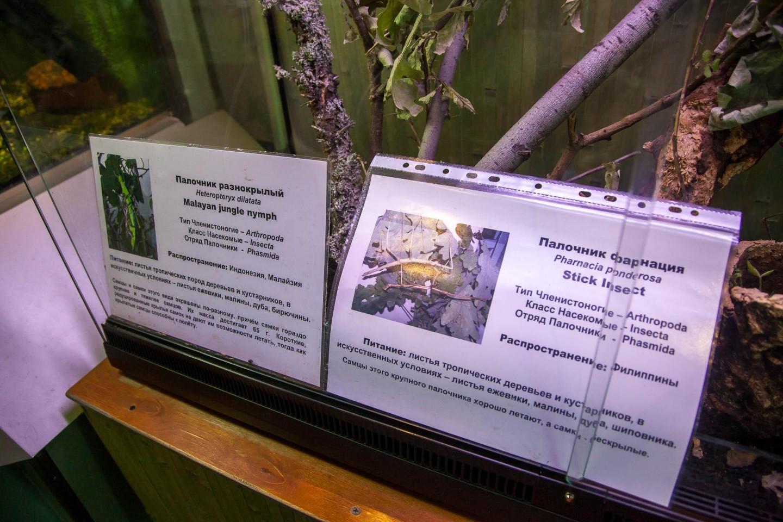 Бабочки и тропики, Московский зоопарк, Москва — ParkSeason