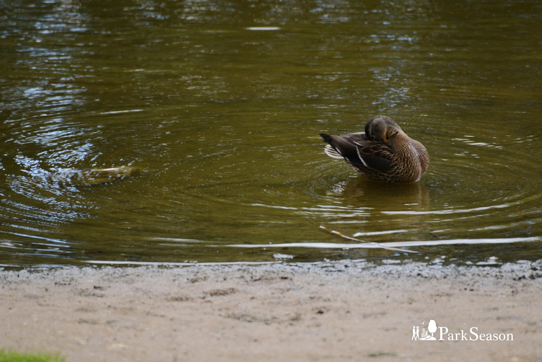 Пенягинский пруд — ParkSeason