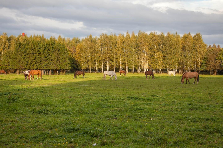 Конные прогулки — ParkSeason