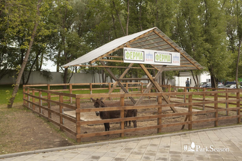 «Городская ферма», ВДНХ, Москва — ParkSeason