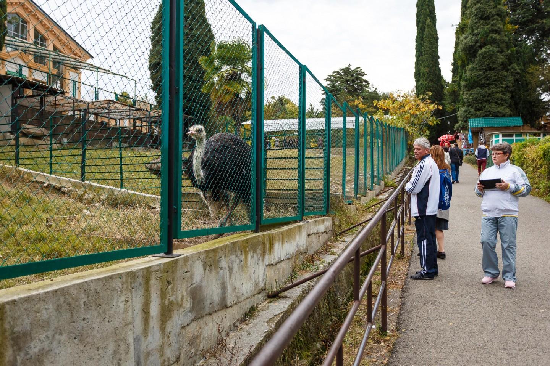 Вольер страусов — ParkSeason