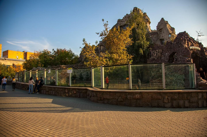 Амурский тигр, Московский зоопарк, Москва — ParkSeason