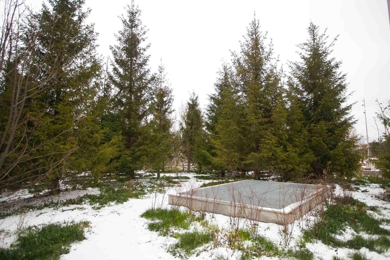 Хвойный лес, Парк «Зарядье», Москва — ParkSeason
