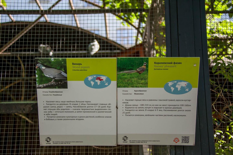 Вяхирь, Московский зоопарк, Москва — ParkSeason