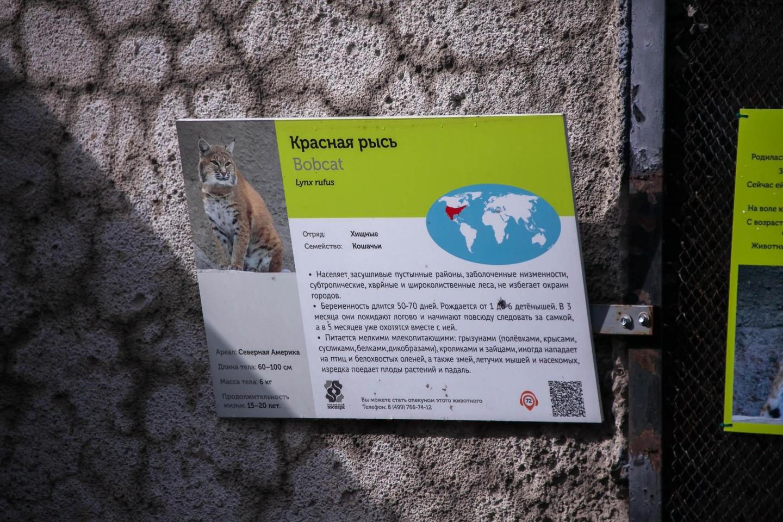 Красная рысь, Московский зоопарк, Москва — ParkSeason