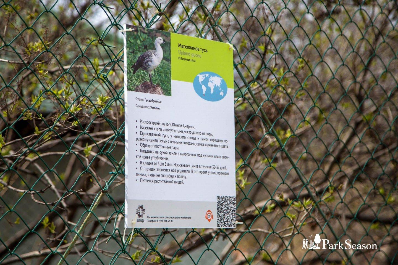 Магелланов гусь, Московский зоопарк, Москва — ParkSeason