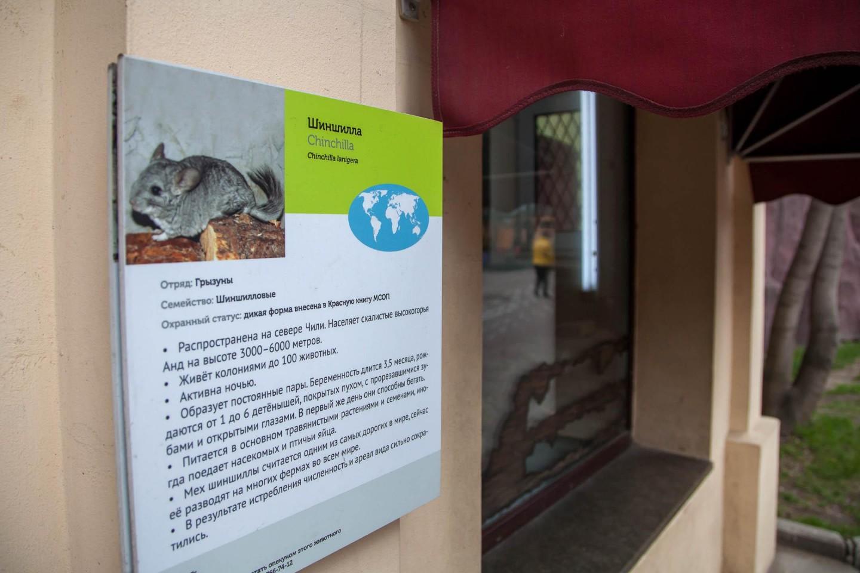 Шиншилла, Московский зоопарк, Москва — ParkSeason