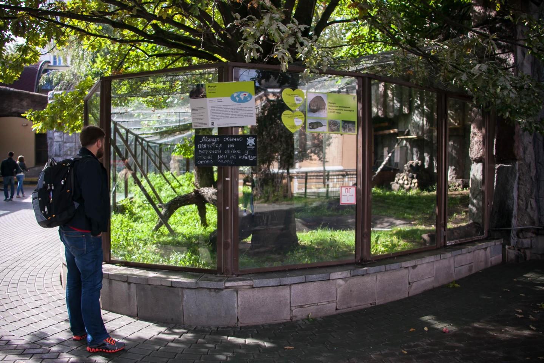 Кошки тропиков, Московский зоопарк, Москва — ParkSeason