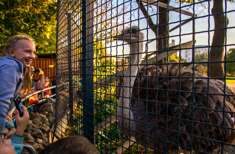 Африканский страус, Московский зоопарк, Москва — ParkSeason