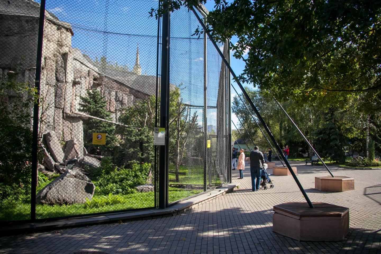 Белоплечий орлан, Московский зоопарк, Москва — ParkSeason