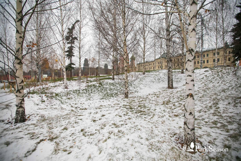 Березовая роща, Парк «Зарядье», Москва — ParkSeason