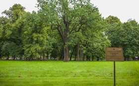 Михайловский сад: мероприятия, еда, цены, каток, билеты, карта, как добраться, часы работы — ParkSeason