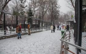 Московский зоопарк: мероприятия, еда, цены, билеты, карта, как добраться, часы работы — ParkSeason