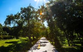 Сиреневый сад: мероприятия, еда, цены, билеты, карта, как добраться, часы работы — ParkSeason