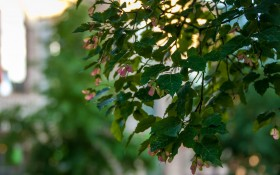 Александровский парк: мероприятия, еда, цены, билеты, карта, как добраться, часы работы — ParkSeason